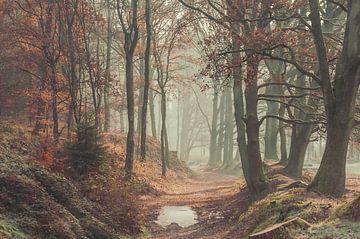 Herfst Posbank van Nancy van Verseveld