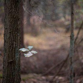 De laatste vijf blaadjes aan een eikenboom in een herfstkleurig bos nabij Winterswijk in de Achterho van Tonko Oosterink