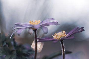 Blumen Teil 85 von Tania Perneel