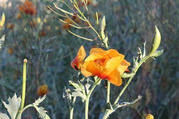 bloem van Priscilla Miedema