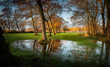 Bomen von Johan Vet