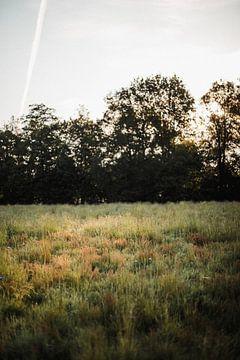 Sonnenstrahl auf dem Feld von Holly Klein Oonk
