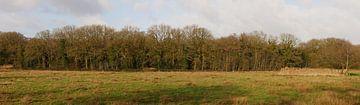 Mantingerbos met weilanden van Wim vd Neut
