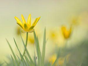 Yellow mystery van Jacqueline Heemskerk