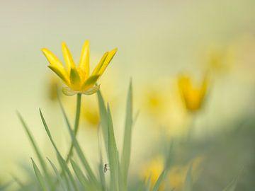 Yellow mystery sur Jacqueline Heemskerk