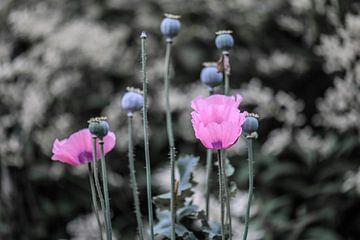 rosa und grau von Tania Perneel