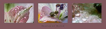 'Parels van water' op een lelie van Eddy Westdijk
