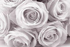 rozen met druppels