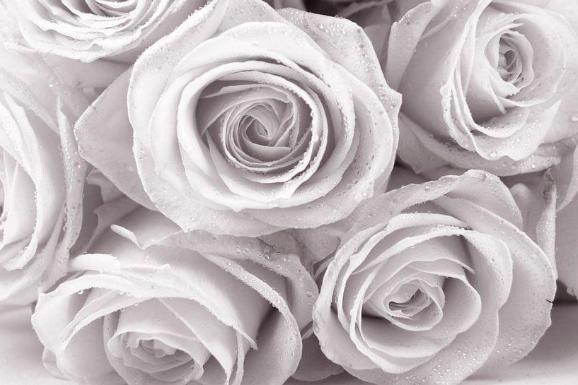 rozen met druppels van Dirk van Egmond