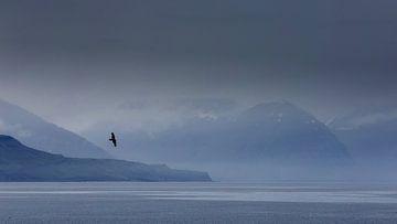 Un corbeau pour un paysage de fjord