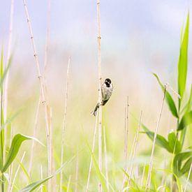 Vogel in het Riet van Scholtes Fotografie