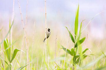 Vogel in het Riet