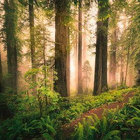 Redwood Jungle van Edwin Mooijaart