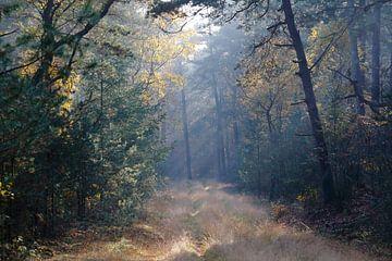 Herfstkleuren van Eric-Jan Oud