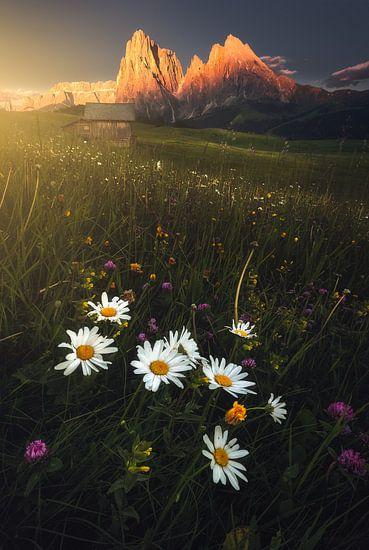 Golden Meadow von Daniel Laan