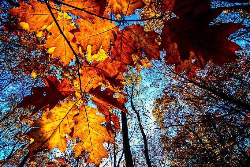 Autumn leaves van Peter Vruggink