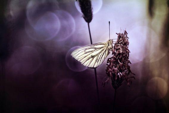 Klein geaderd witje (Pieris napi) (II) van Bob Daalder