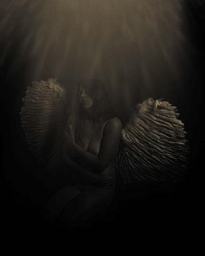 Engel 23 van