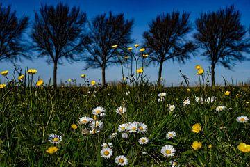 Frühlingsblumen von Jaap van den Bosch