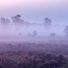 Sentier de la lande violette sur sur Karla Leeftink