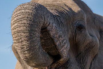 Drinkende olifant von Ingrid Sanders