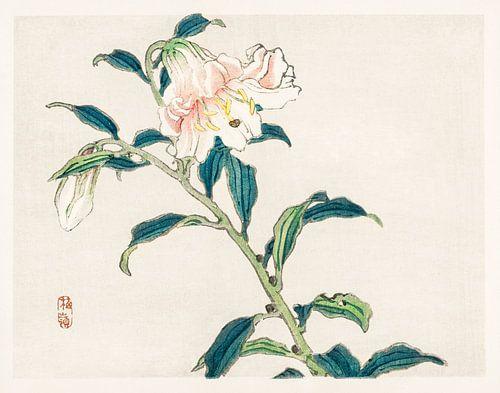 Lely door Kōno Bairei