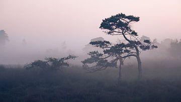 Le rouge du matin à travers le brouillard sur Sven Dirkx