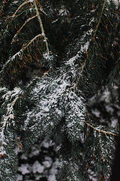 Besneeuwde dennenboom van Jan Willem De Vos
