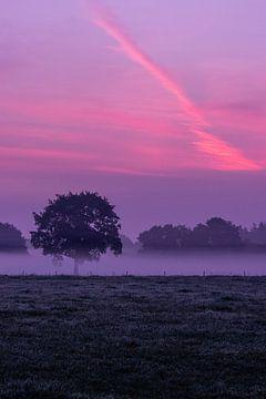 Paarse zonsopgang op de veluwe van Martijn Aleman