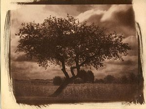 Appelboom in een veld, agrarisch landschap van