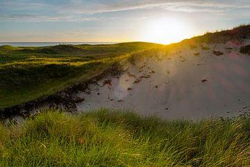 Dunes au dernier soleil sur