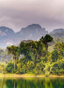 Lush forest van Steven Driesen