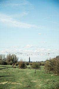 les oiseaux migrent au-dessus des Pays-Bas