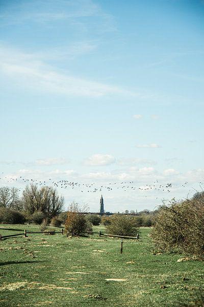 les oiseaux migrent au-dessus des Pays-Bas sur Jan Willem De Vos