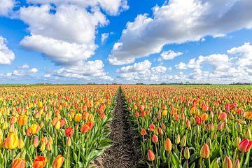 kleurenpalet met tulpen  in bloei van eric van der eijk