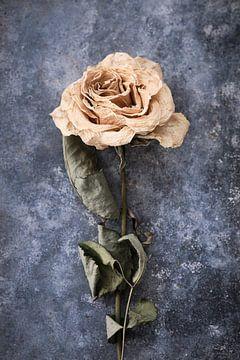 getrocknete Rose auf Zinkuntergrund von Karel Ham