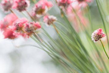 Rood roze bloemen met groene stengels von Esther van Lottum-Heringa