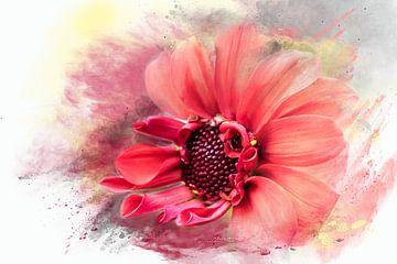 red Queen mini zonnebloem van Harry Stok