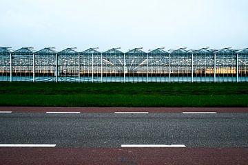 Rozen fabriek van Michiel Wijnbergh