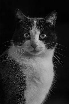portet kat sur Lisan Geerts