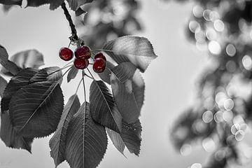 Les cinq cerises van Catherine Fortin