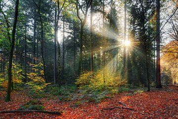 Zonneharpen in het bos in de herfst van Dennis van de Water
