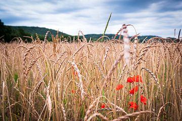Getreidefeld mit Wildmohn von Evert Jan Luchies