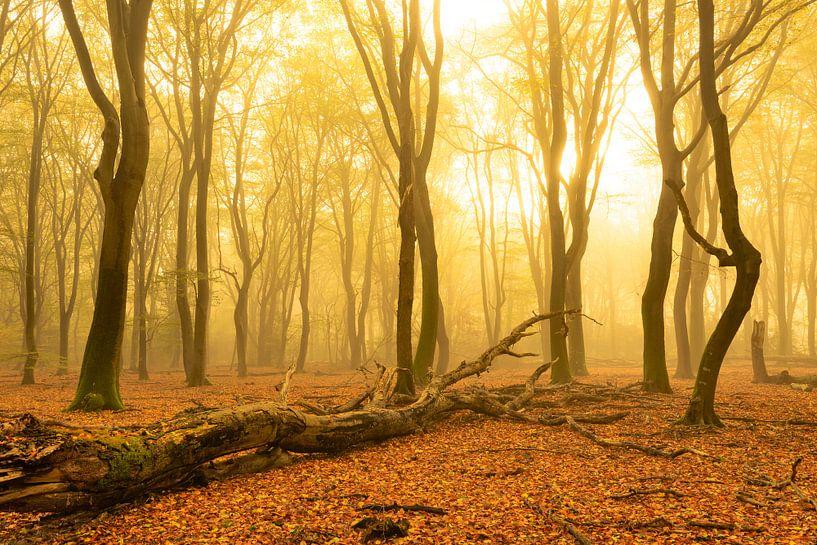 Herfst ochtend in het bos van Sjoerd van der Wal