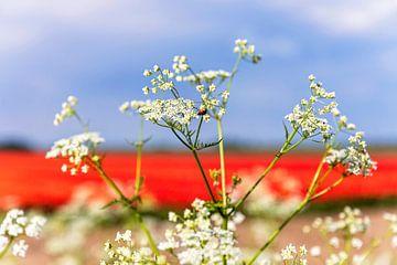 Rood wit en blauw in de natuur 2 van Anouschka Hendriks