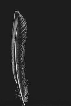 Schwarzer und weißer Frühling von Mirjam Bouma