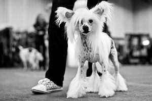 Chinese naakthond en matching gympen van