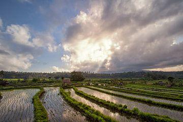 Rijstvelden in een vallei bij ochtendlicht. het eiland Bali van Tjeerd Kruse