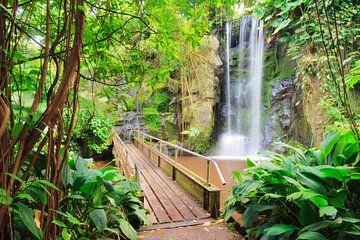 Waterval met brug in de jungle von Dennis van de Water