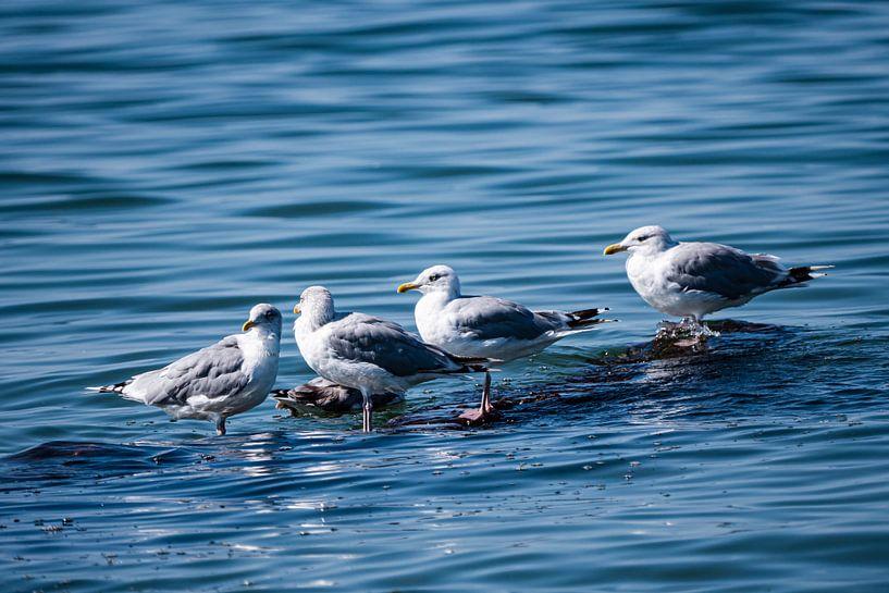 Warten - Möven im Meer von Max Steinwald